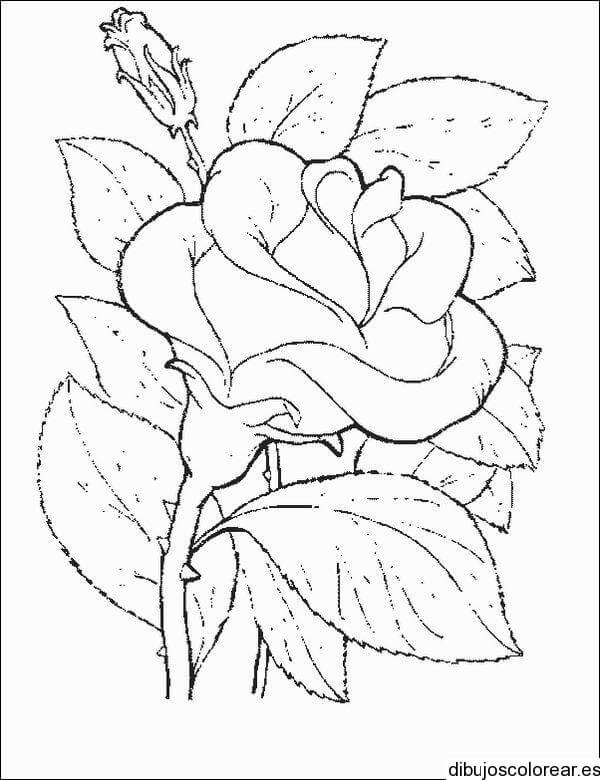 DIbujos de Rosas para Colorear el dia del amor
