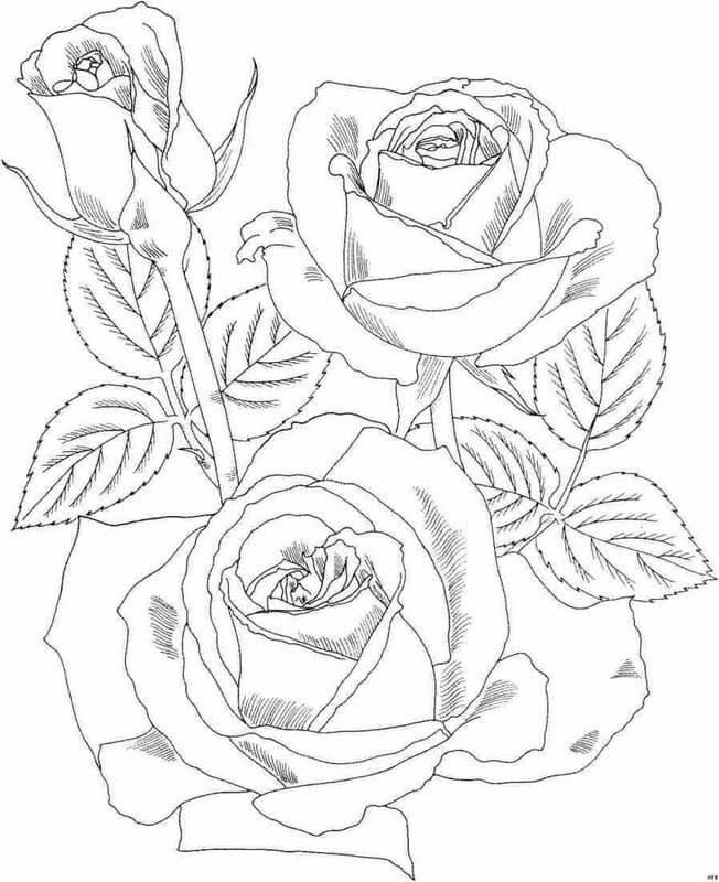 Dibujos de rosas Hermosas para colorear